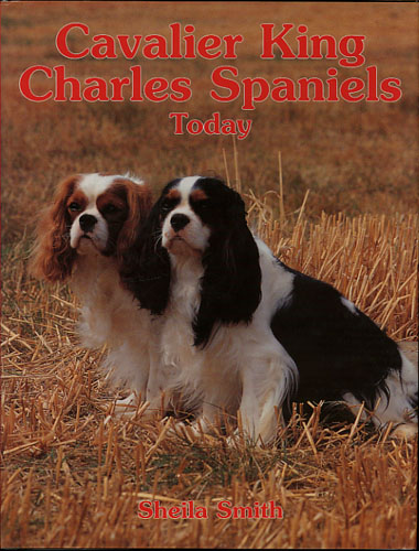 Cavalier King Charles Spaniels today.